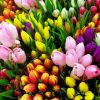 Choosing Flowers Based on Symbolism