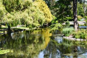 Wedding Destinations in Beacon Hill Park, Victoria