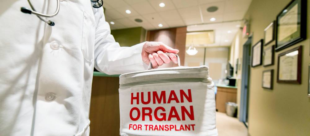 An organ donors organ being prepped for transplant.