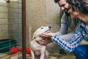 Bringing a pet in to the home can be a source of great joy and fulfillment, just make sure you are prepared for the time, money and effort.