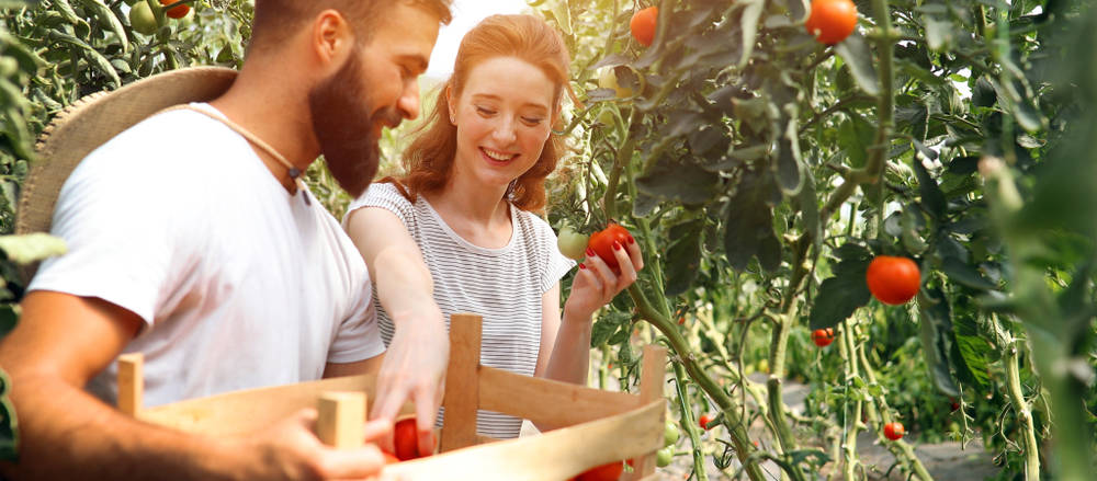 A perfect way to spend more quality time with your partner this time of year is to plant a garden together, among other do-it-yourself projects.